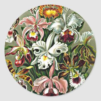 Orchids - Ernst Haeckel artwork, Orchidae Classic Round Sticker