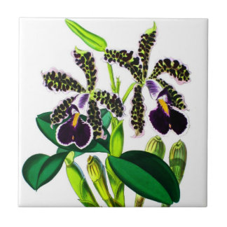 Orchids Tile