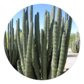 Organ Pipe Cactus 13 Cm X 13 Cm Square Invitation Card