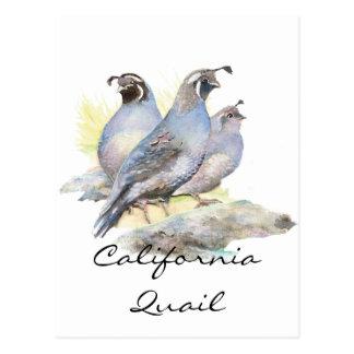 Original Watercolor California Quail. Bird Postcard