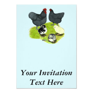 Orpington Blue Chicken Family Card