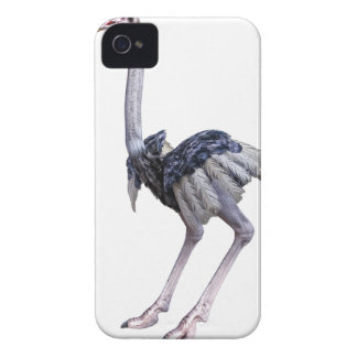 Ostrich Case-Mate iPhone 4 Case