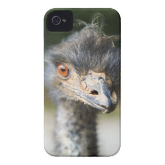 Ostrich iPhone 4 Case