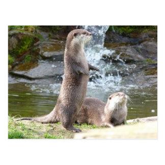 Otters enjoying the sun postcard