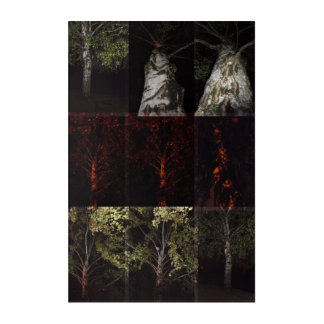 Out of the darkness. Birch' Acrylic Wall Art