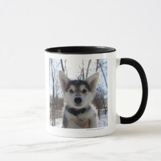 Outdoor portrait of husky dog puppy mug