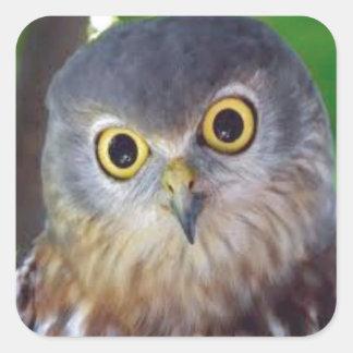 Owl-alishush Square Sticker