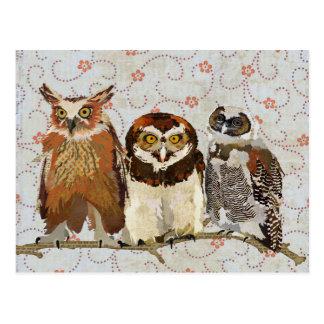 OWL IN A ROW Postcard