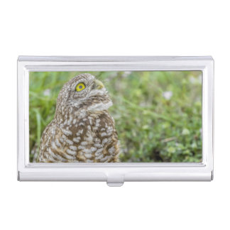 Owl Looking Up Business Card Holder