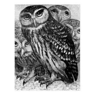 Owls vintage engraving postcard