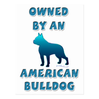 Owned by an American Bulldog Postcard