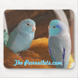 Pacific blue Parrotlets love birds mouse pad photo