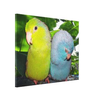 Pacific Parrotlets Amazon Jungle Wrapped Canvas
