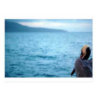 pacific pelican postcard