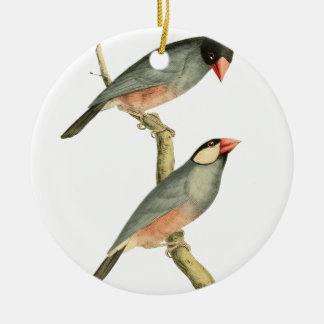 Paddy bird, Rice bird, or Java Sparrow Bird Illust Christmas Ornament