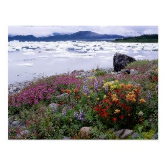 Paintbrush, Lupine, Fireweed. Icebergs Russell Postcard