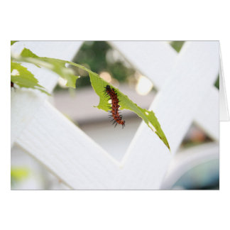 Painted Lady Caterpillar Greeting Card