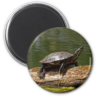 Painted Turtle on a Log Magnet