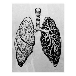 pair of lungs postcard