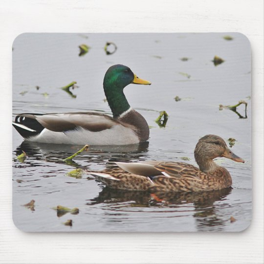 Pair of Mallard Ducks Mouse Pad