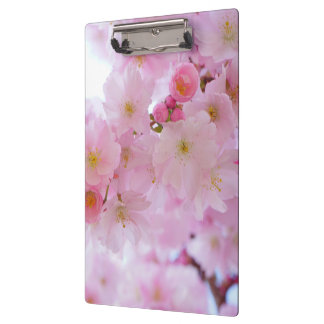 Pale Pink Cherry Blossoms Clipboard