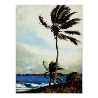 'Palm Tree-Nassau' Poster