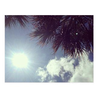 Palm Tree & Sun Postcard