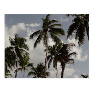 Palm Trees Dominican Postcard