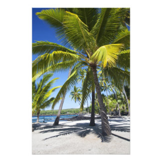 Palm trees, National Historic Park Pu'uhonua o 2 Photo Print
