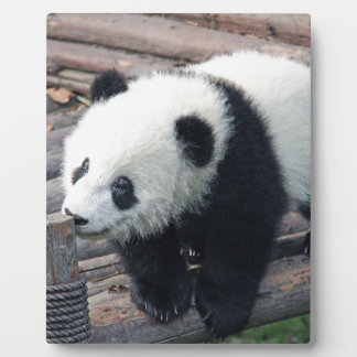 panda bear bears custom personalize Anniversaries Plaque