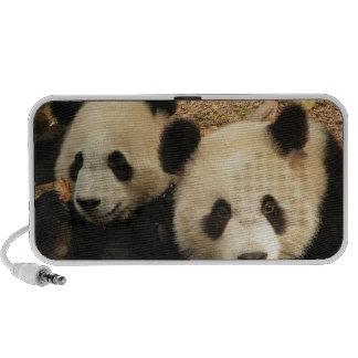 Panda Bears Doodle Speaker