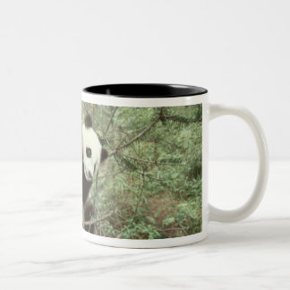 Panda cub climbing tree, Wolong, Sichuan, Two-Tone Coffee Mug