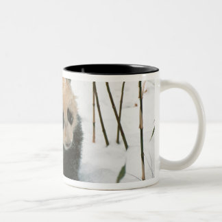 Panda cub on snow, Wolong, Sichuan, China 2 Two-Tone Coffee Mug