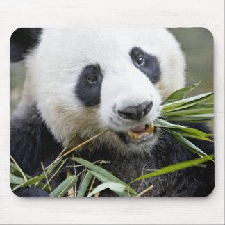 Panda eating bamboo shoots Alluropoda 2 Mouse Pad