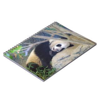 Panda Lin Ping Notebook