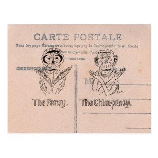 Pansy and Chimp Humour Postcard