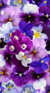 Flowers Wallpaper Iphone 8 Plus Classy World
