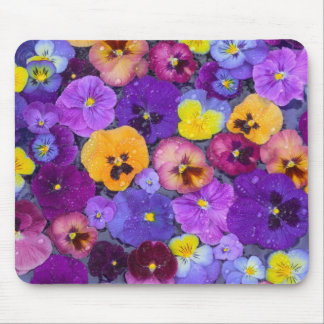 Pansy flowers floating in bird bath with dew mouse pad