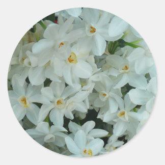 Paperwhite Narcissus Delicate White Flowers Classic Round Sticker