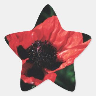 Papery Red Poppy Star Sticker