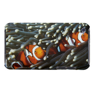 Papua New Guinea, two false clown anemonefish iPod Touch Case