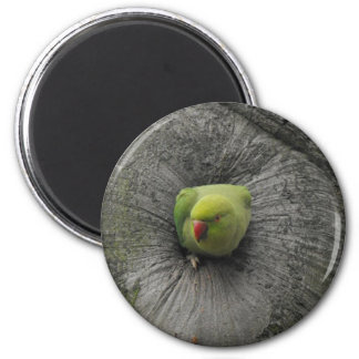 Parakeet in Amsterdam 6 Cm Round Magnet