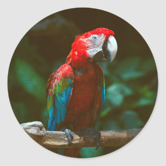 Parrot bird classic round sticker