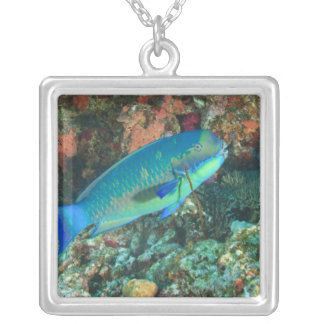 Parrotfish near Taveuni Island, Fiji, South Silver Plated Necklace