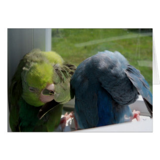 Parrotlet Birds Humourous Greeting Card Photo
