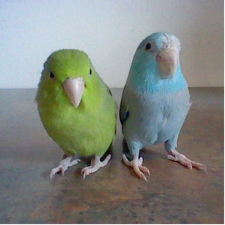 Parrotlet Sculpture Standing Photo Sculpture