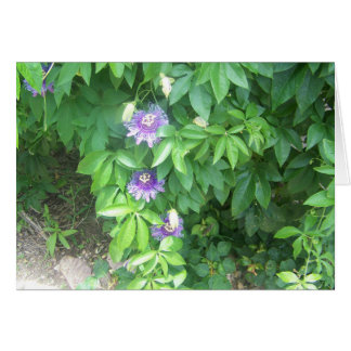 Passion Flower Notecards Card