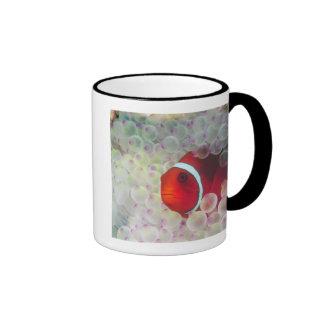Paupau New Guinea, Great Barrier Reef, Mug