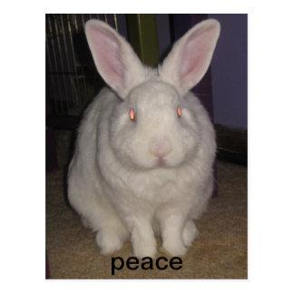 peace bunny postcard