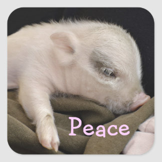 Peace Sticker with Piggy Design